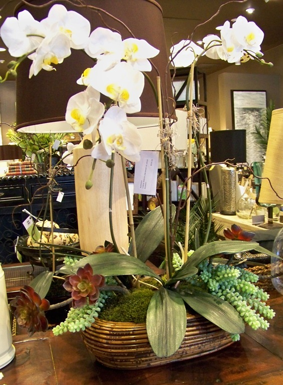 Ellias And Cymbidium Orchids Alternate In Containers Outside The Windows Of Residents Dining Room
