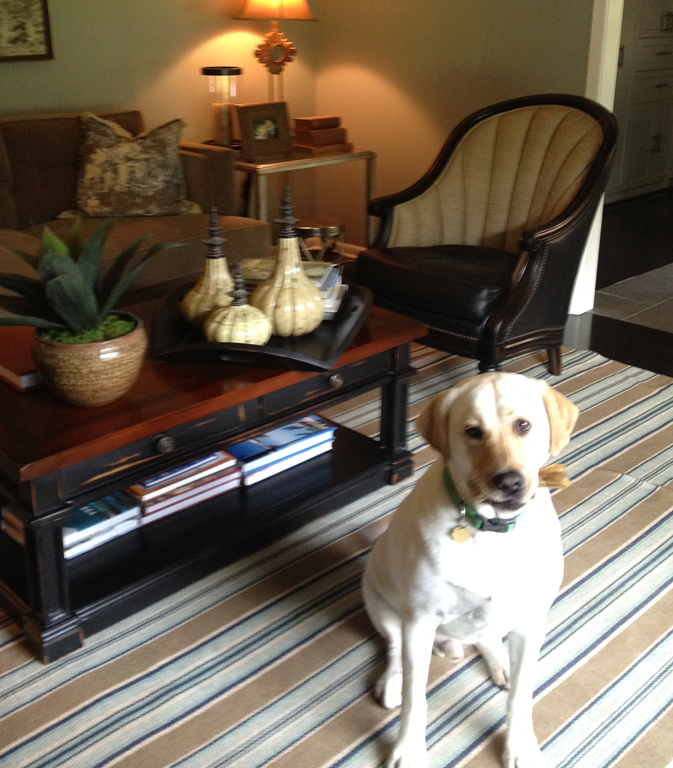 Rugs To Use In Family Rooms For Dogs