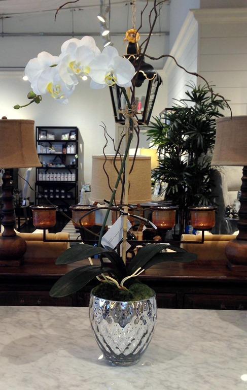 Orchid Plant Home Decoration