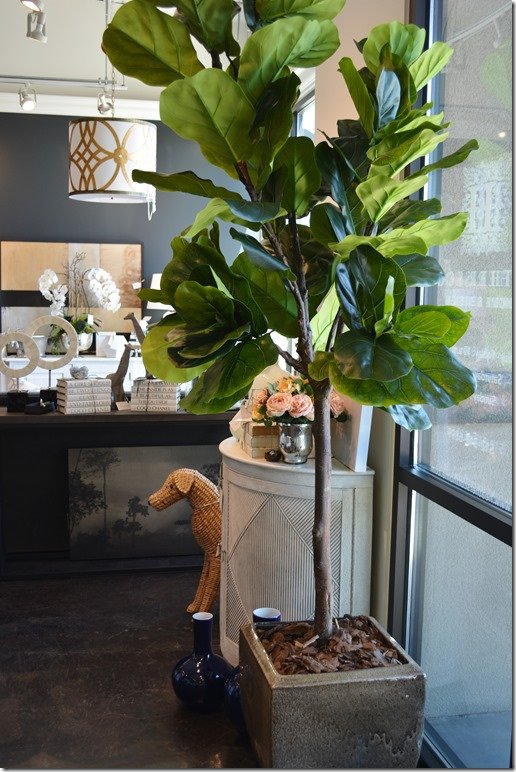 What S New Wednesday Fiddle Leaf Fig Trees Heather