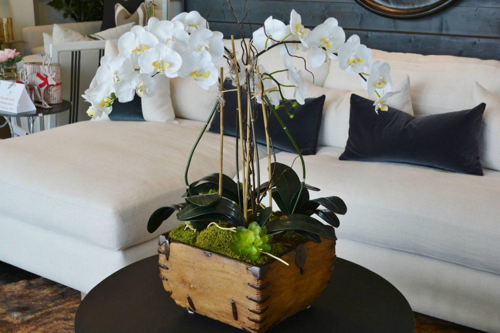 orchid3edit