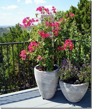 back deck plantings