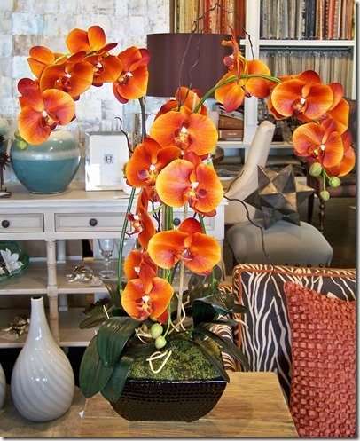 sunset orchid