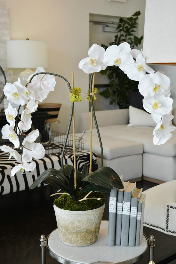 orchid5edit