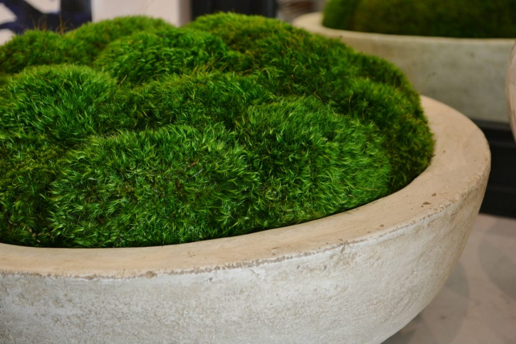 What S New Wednesday Preserved Moss Centerpieces